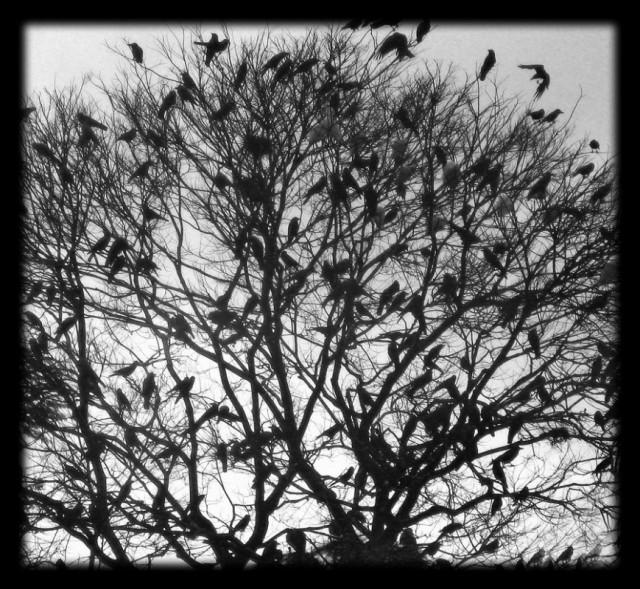 птицы катманду
