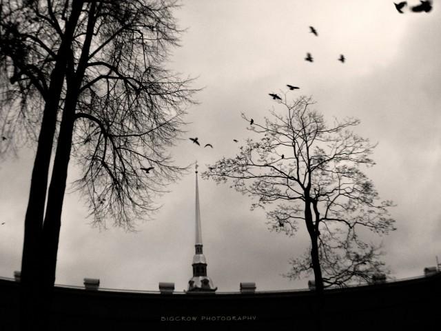 вороны над Петропавловским шпилем