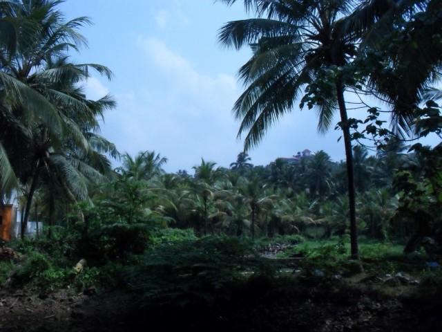 Пейзажи Кералы...Снятся во сне. И почему-то кажутся родными.