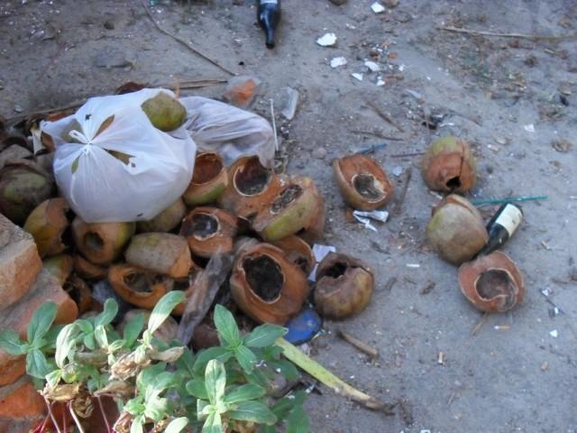 А кокосы там - мусор. Они падают с пальм в таких количествах, с которыми справиться крайне сложно