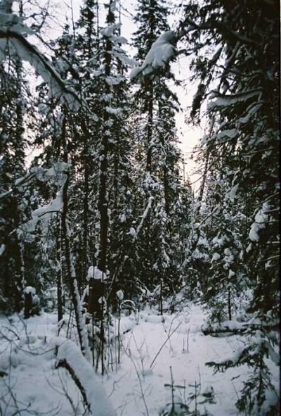 снежный сон