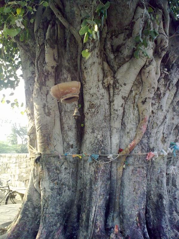 Дерево желаний (Кальпаврикша или Кальпатару)