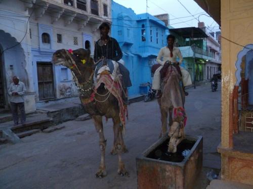 верблюдопоилка