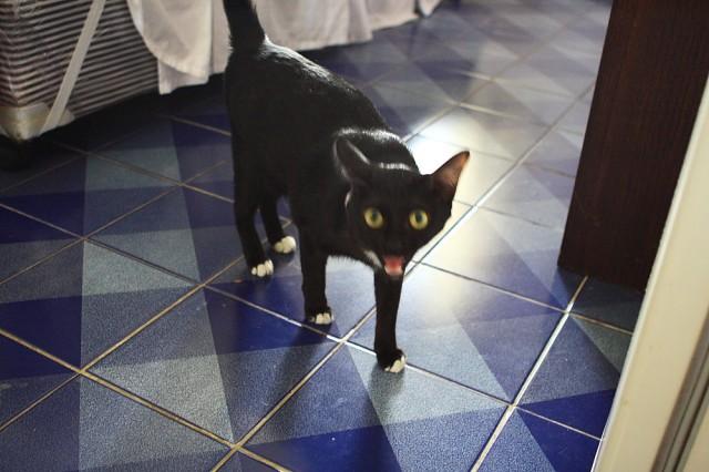 это тот черный котик, который лазит через балкон, стисняется и ноет ))