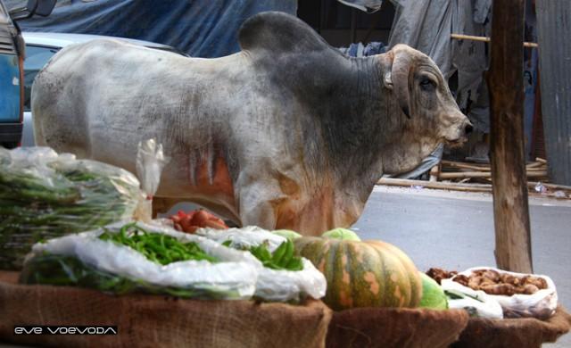 Лучшие овощи всегда с быком:)