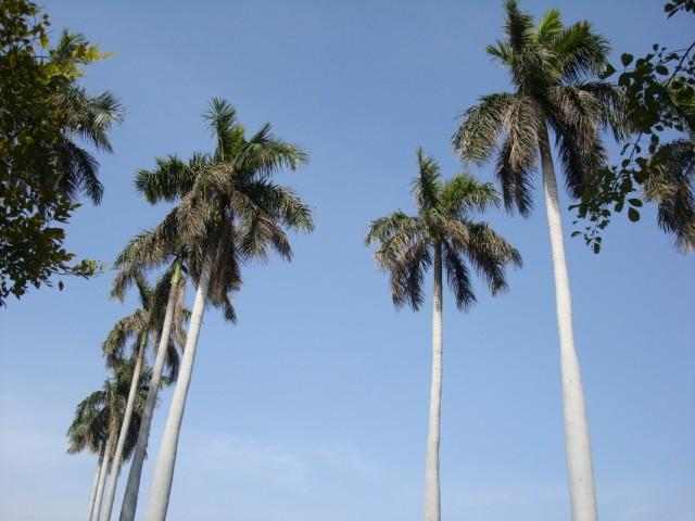 небо над Дели 28 февраля