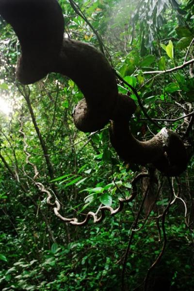 по дороге к баньяну через джунгли