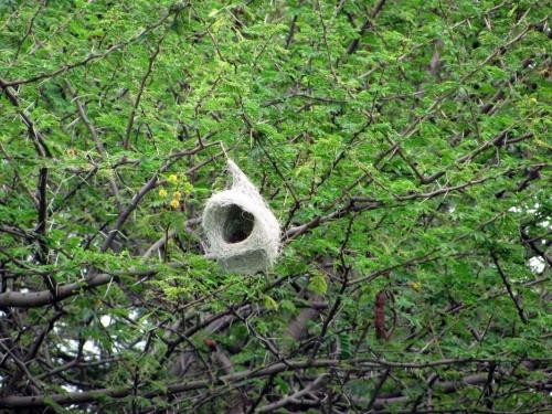 Гнездо-сказка, гнездо-мечта...