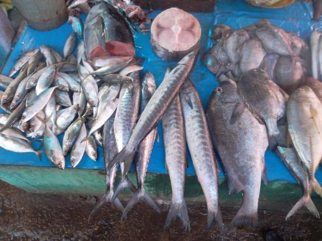 Моря и океаны Биласпура обильны рыбой