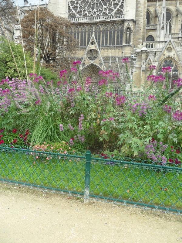 Цветы у Нотр Дам