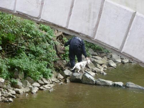 полицейский спасает из воды собаку