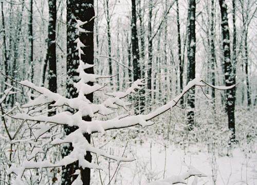 Почти елка...