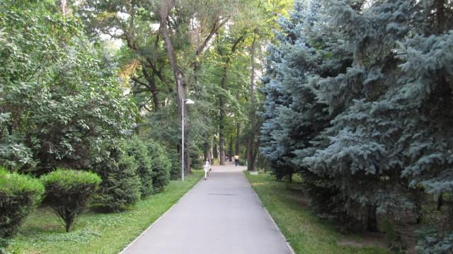 Буйство зелени сразу бросается в глаза тем, кто впервые посетил наш город. Или оказался тут после долгого отсутствия.