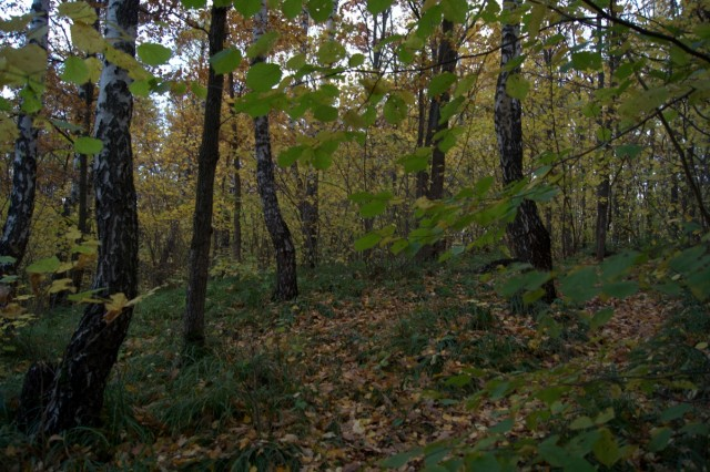 чисто-лес