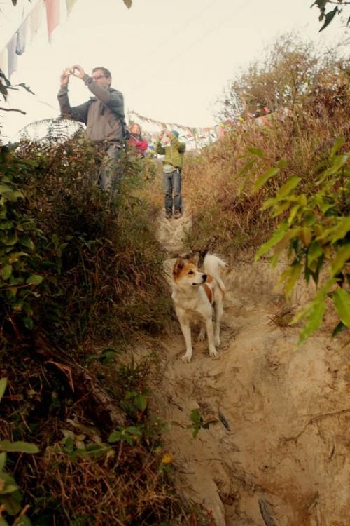 собака Тайгер прошел с нами до Катманду, показывал дорогу, был накормлен печеньем.