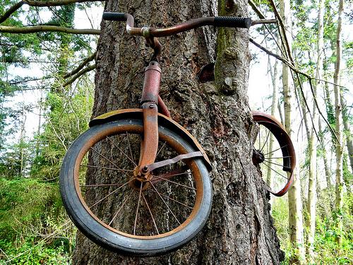 о.Вашон.Велосипед привязали к дереву в 1914году.
