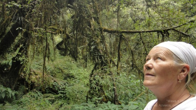 Сказочный лес за Бамбуу