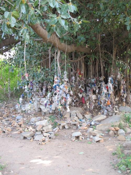 Некое священное дерево. Подвешены к нему камни в мешочках или просто в ткани