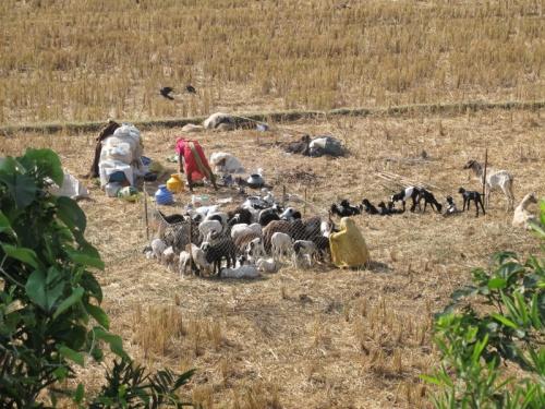 Кочевники с семьями: они переезжают с места на места со всем своим скарбом и животными.