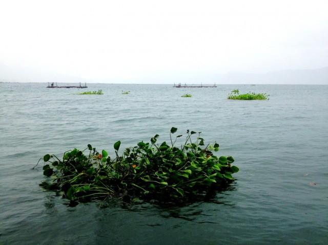 смотрю на проплывающие мимо островки из травы