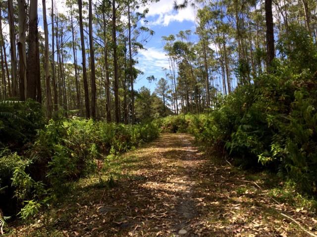 Дорога по заповедному лесу
