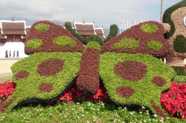 И такие бабочки:)