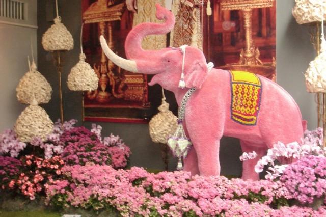 И слоны...