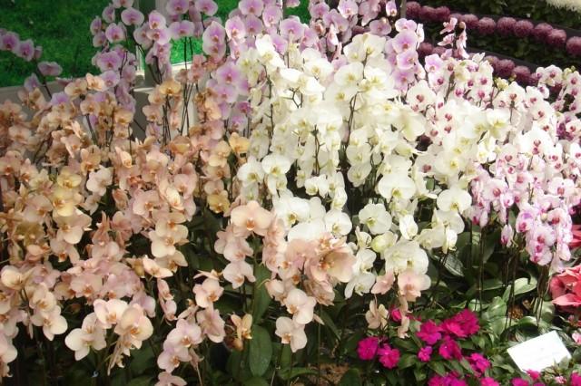 Орхидеи...