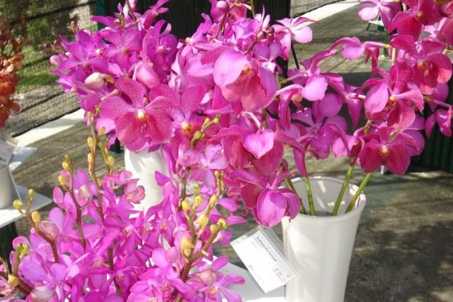 И снова орхидеи.