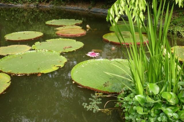 И, собственно говоря, флора:)