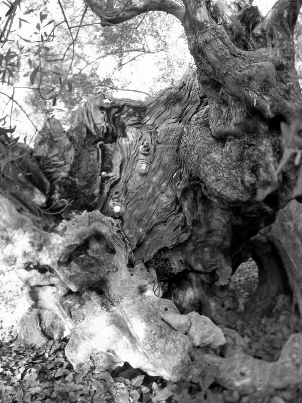 дерева,