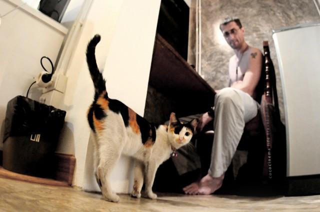 про кошку Фофифку (сосиску), которая подозревает холодильник