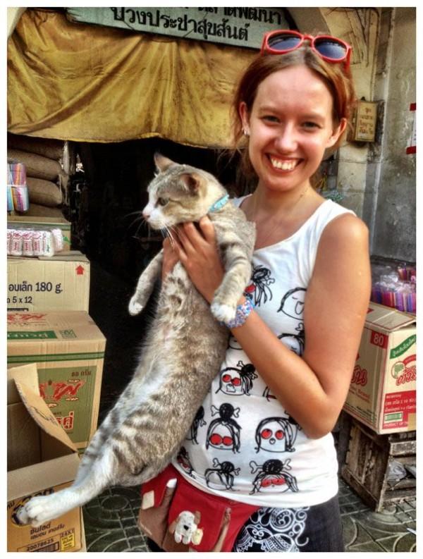тайские коты-ы