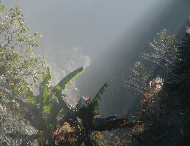 утром пальмы курят