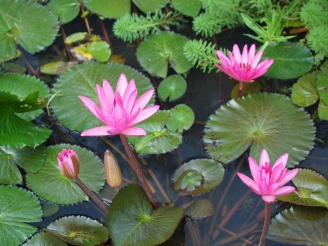цвета в Ланне после сезона дождей