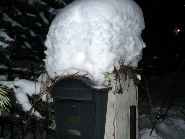 зимой он радует ягодками-таращатся из-под снега