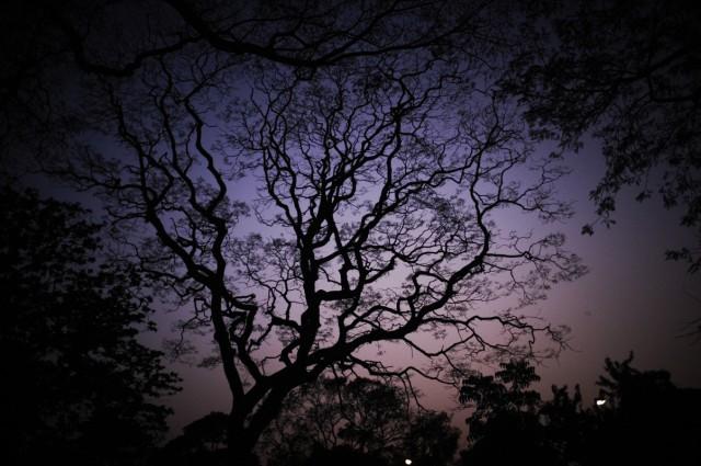 Дерево калькутских сказок