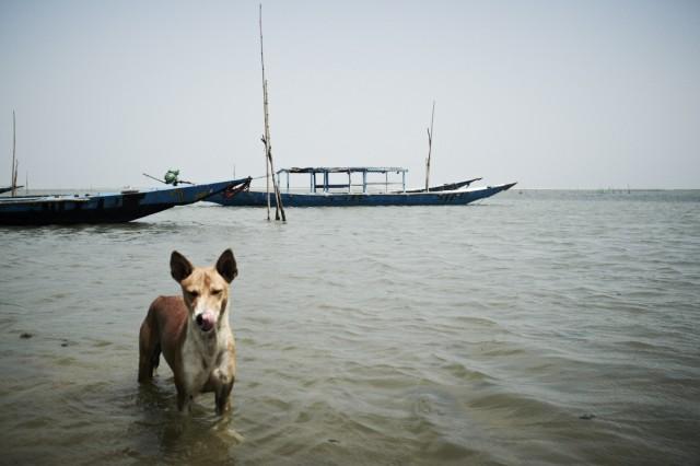 Остров Заброшенных Собак 55