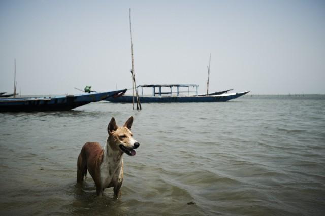 Остров Заброшенных Собак 56