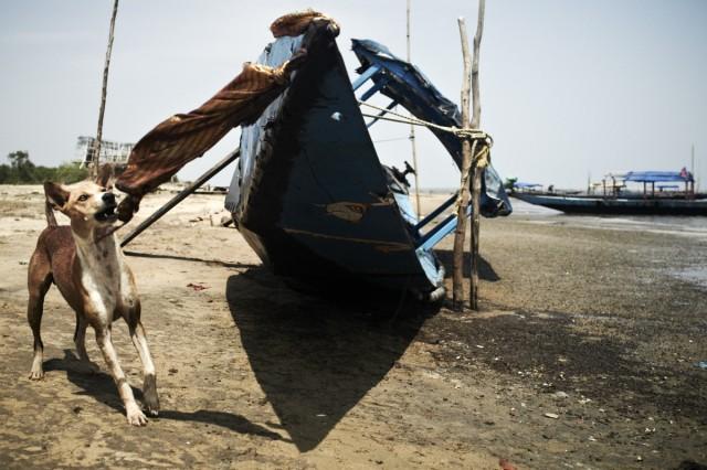 Остров Заброшенных Собак 61