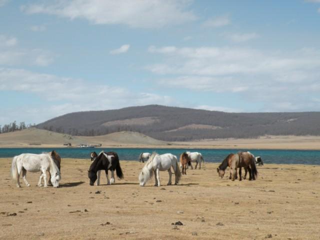 Южный берег озера