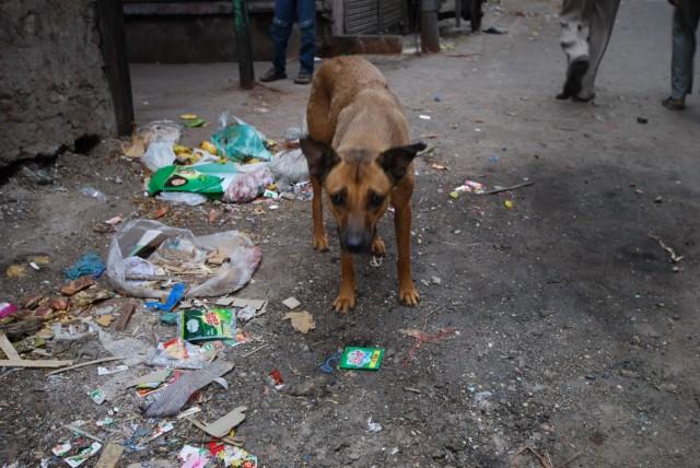 собака в отчаянии