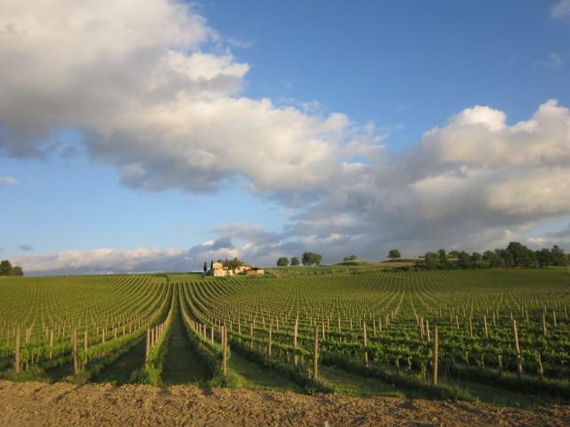 Еще виноградники