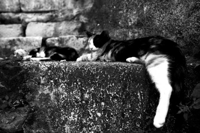 Полуденные коты
