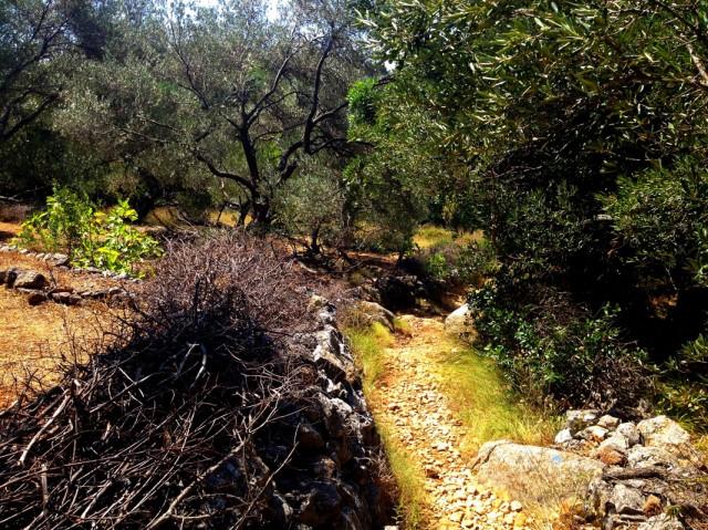 Сначала путь лежит через оливковую рощу