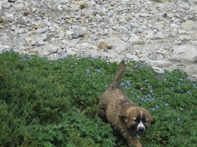 прибежал щенок