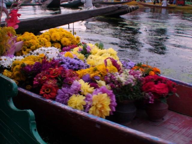 А я продаю цветы! Покупайте сразу все!