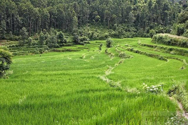 не устаю любоваться пейзжами Непала