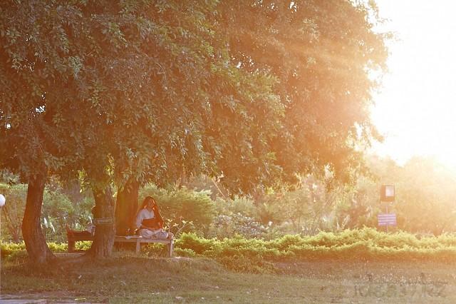 под сенью древнего дерева