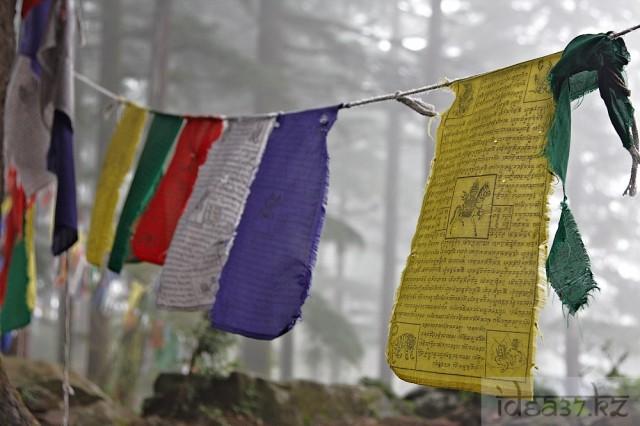 островок цвета в сером тумане Гималаев